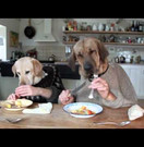 A funny clip of dogs with beautiful table manners Image